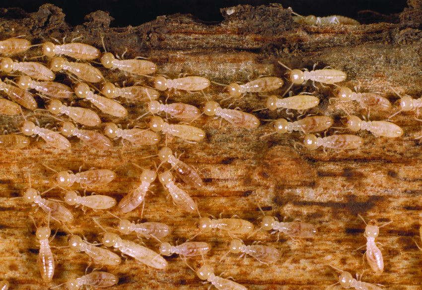 how to detect termite damage